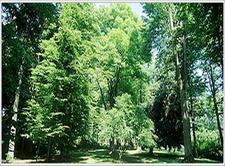 Schlosspark Hagenberg Upper Austria Austria