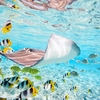 Schools Of Colorful Fish Species