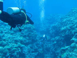 Nha Trang Scuba Diving and Visiting 4 Islands Photos