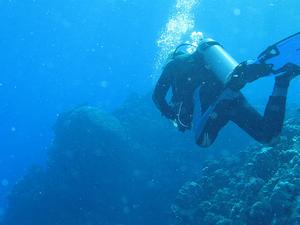 Scuba Diving in Tarkarli with Dive Vengurla Photos