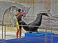Sea Lion In Constanta Dolphinarium