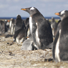 Sea Lion Island In Falkland Islands