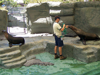 Seals At Melbourne Zoo