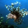 Sea - Pulau Kapalai