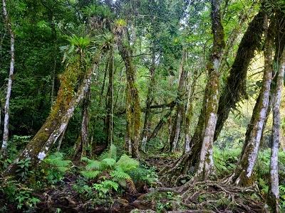 Semuc Champey Forest