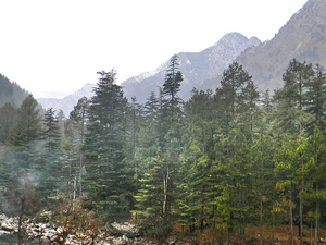 Kasol Holiday Package Photos