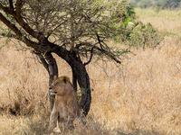 7 Days Tanzania Safari in Style