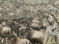 3 Days Serengeti On a Budget