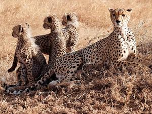 5 Days 4 Nights Camping Safari Photos