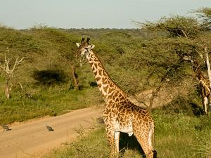 5 Days Tanzania Safari Photos