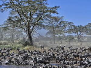 Serengeti Wildebeest Migration Trail