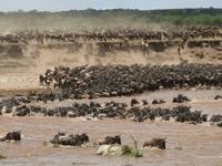Serengeti Migrations Safaris -Mara river