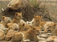 3 Days Serengeti - Ngorongoro Package