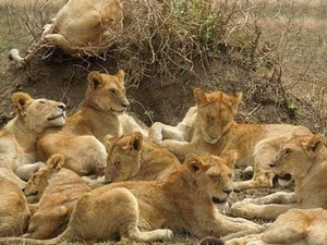 3 Days Serengeti - Ngorongoro Package Photos