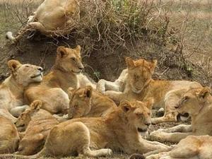 3 Days Serengeti - Ngorongoro Package Fotos