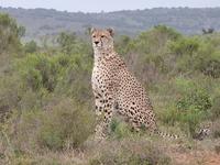 Shamwari Safari
