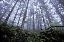 Shennongjia Virgin Forest