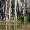 Shingle Creek Florida