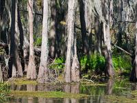 Shingle Creek