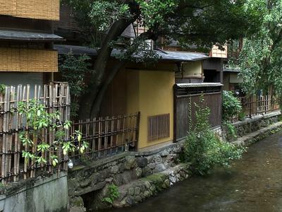 Shirakawa Canal In Gion