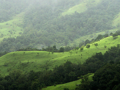 Shola Grasslands And Forests In The Kudremukh