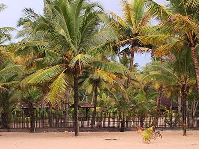 Shoreline At Marari Beach
