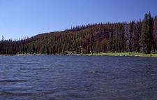 Shoshone Lake - Yellowstone - Wyoming - USA