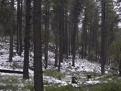 Sierra Ancha Woodlands