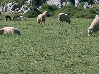 Sierra de Grazalema Nature Reserve