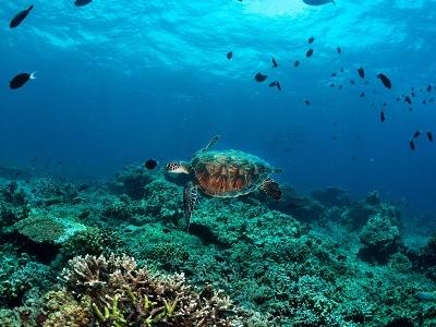 Sipadan - Borneo - Sabah