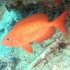 Sipadan Island - Marine Life - Sabah