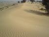 Sir Ganganagar Desert
