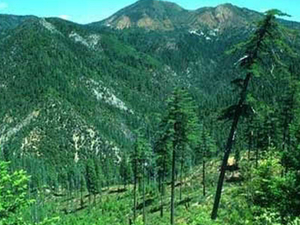 Montañas Siskiyou