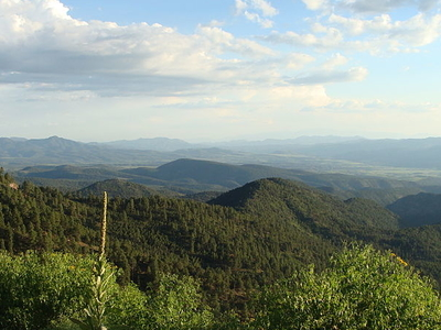 Sitgreaves National Forest