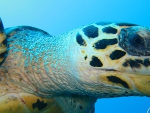 3 Night With 6 Dives In Hulhumale Maldives Fotos