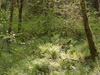 Six Foot Track To Te Motiwha Saddle & Makomako Hut - Te Urewera National Park - New Zealand