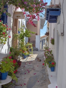 A Traditional Street