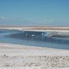Slar De Atacama - Andes