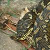 Snake Range National Park