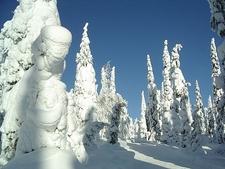 Snow Covered Trees In Kuusamo - Finland