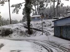Snowfall In Ranikhet