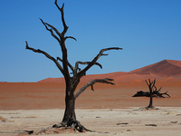 Johannesburg to Namibia Camping or Lodges