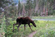 South Boundary Trail At Glacier - Montana - USA