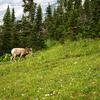 South Boundary Trail - Glacier - Montana - USA