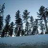 South Dakota Black Hills Forest