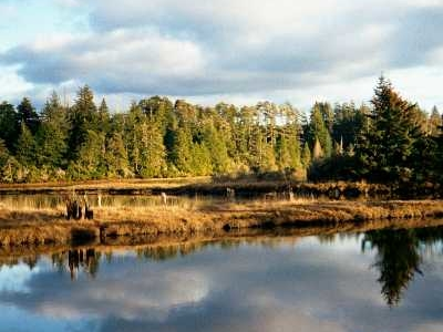 National Estuarine Research Reserve Slough