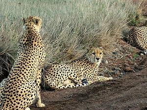 Sur Turkana Reserva Nacional