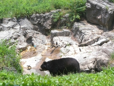 Spectacled Bear In Queens Zoo