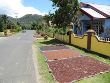 Spices - Tidore Island - The Moluccas
