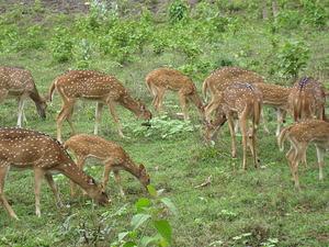 Bibhuti Bhushan Santuario de Vida Silvestre